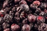 Wild Blueberry – Bilberry